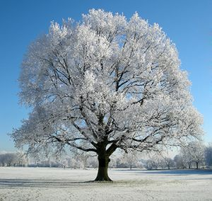Bosworth Park Winter Frost.jpg